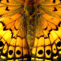 Symmetry - by ecstaticist