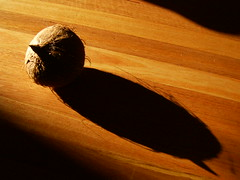 Coconut Comp.1 (danielsc_swin122) Tags: sunlight subject upon angled my