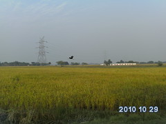 Flying Crane neer Sarsai Nawar