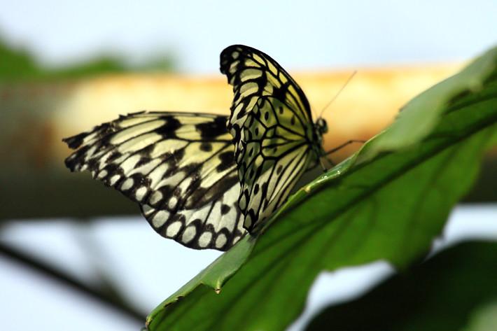 110710_butterfly02