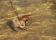 Sous-l'eau-I