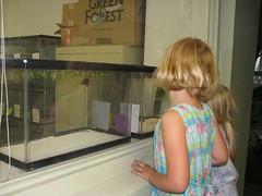 bfly nursery