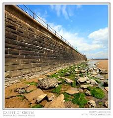 Carpet of Green (Sean Bolton (no longer active)) Tags: seaweed beach rock wall swansea wales coast cymru seawall wfc swanseabay abertawe seanbolton welshflickrcymru baeabertawe ffotocymrucouk ffotocymru