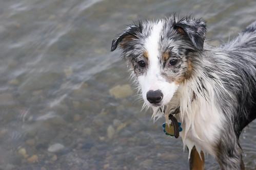 Spikey Pup