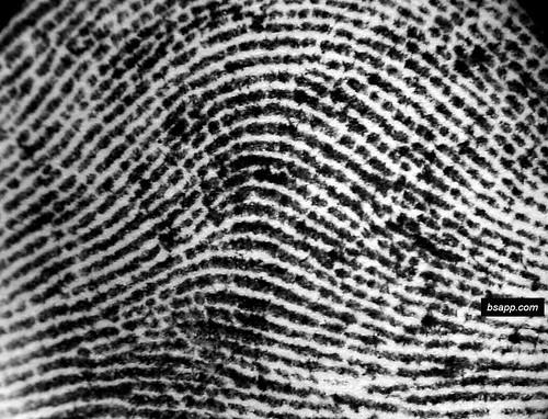 DSC00827 by brennon.sapp.  sc 1 st  forsci - Wikispaces & forsci - Fingerprinting