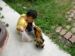 サムイ島-猫のベッキー1