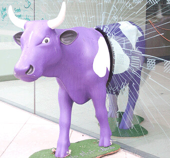 Purple Cow courtesy moq88 on flickr