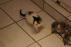 Kaylee (Mandy Verburg) Tags: pet animal female cat kitten kat feline kitty ek predator huisdier dier pussycat vrouw kaylee roofdier katachtige cyper thebiggestgroup mandyarjan thebiggestgroupwithonlycats