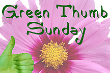 Join Green Thumb Sunday