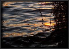 Bubbles (Kirsten M Lentoft) Tags: sunset lake reflection water topv111 denmark searchthebest bubbles insects naturesfinest blueribbonwinner splendiferous abigfave arresø anawesomeshot aplusphoto ultimateshot momse2600 isawyoufirst ysplix kirstenmlentoft