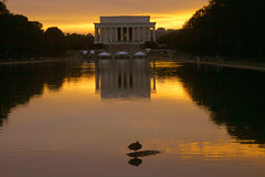 Sunset time to rest (MNesterpics) Tags: sunset reflection water topv111 duck dc washington districtofcolumbia topc50 topc75 topc100 lincoln lincolnmemorial 2007 eow abigfave impressedbeauty superhearts platinumheartaward