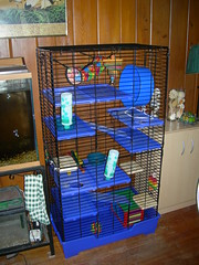 Chinchilla cage with ideal accessories