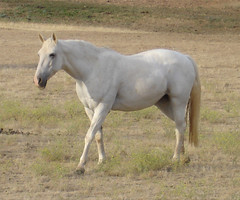 Horse Power (jhhwild) Tags: horse power powerful