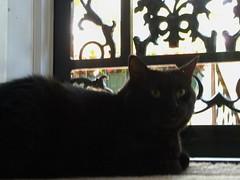 Sir Jinx (Scarlet.i.) Tags: cat jinx ayannadukes