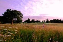 Longest day of the year ... (Andrea loves autumn skies) Tags: light sunset summer sun tree green field self nikon dusk sigma solstice sp day3 1020mm setting picnik selfie day216 d80 7days3 beautifulengland dilojun10 andreadavisphotography