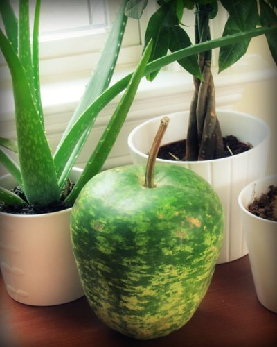 Fall Green Apple Gourd