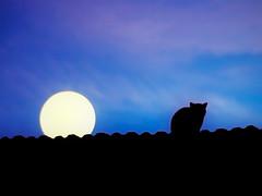 A Lua de So Jorge [St George's Moon] (Jim Skea) Tags: roof brazil moon brasil riodejaneiro night cat 50mm downtown centro gato lua noite moonlight luar teto nikkor50mmf18daf fujifilmfinepixs5pro