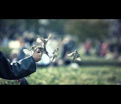 the birdman (millan p. rible) Tags: street cinema paris france bird canon candid stranger notredame feed cinematic 135l cathdralenotredamedeparis canonef135mmf2lusm thebirdman placeduparvis canoneos5dmarkii 5d2