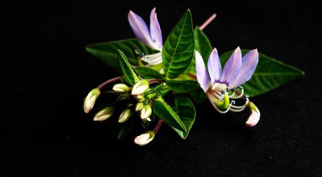 IMG_1284  Artistic Flower