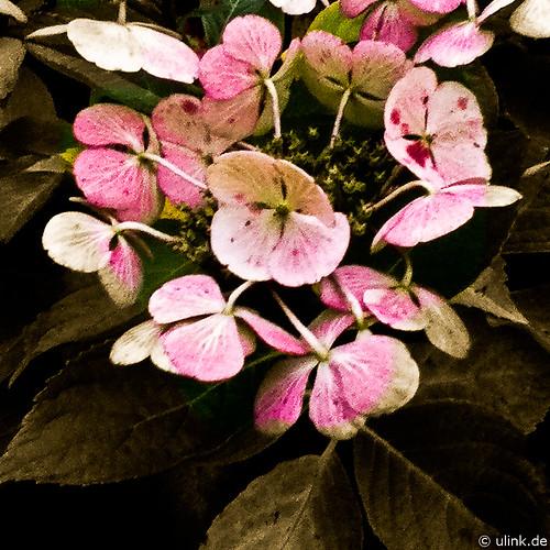 _flowerpower