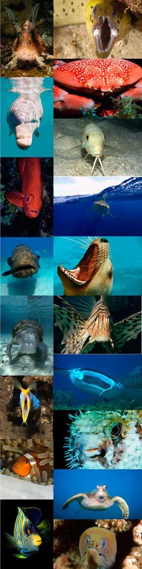 Diversidade marinha©
