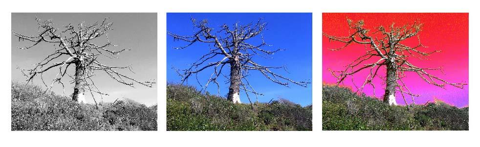 Tree.6.13.07