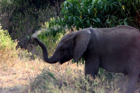 elephant having mudbath
