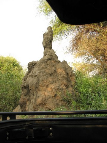 termite mound..it was about 14 feet tall