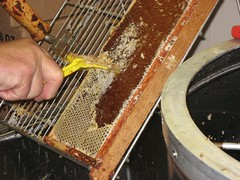 Beekeeping 2638