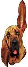 De Radio2 Hond