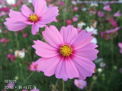 DSCF1939花