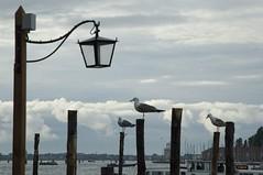 Venezia: lampione e gabbiani