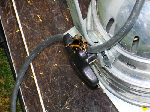 Bee on Par56