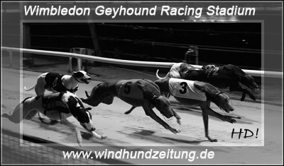 Greyhound Racing: Race_09_Wimbledon
