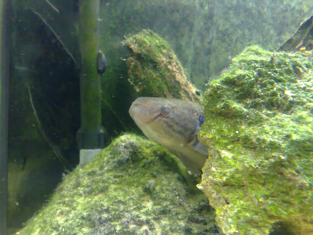 brackish fish tank how to