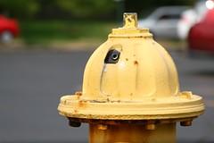 Yellow Hydrant