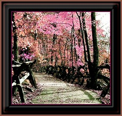 Festive Path (Rebel XT Shots / Bobbie) Tags: trip travel pink trees vacation usa mountains art nature leaves path alabama rails paintshoppro rebelxt coolest photoart breathtaking imagemanipulations photograhs beautifulcapture superbmasterpiece diamondclassphotographer flickrdiamond thatsclassy