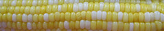 Mas (!MimosaMicheMichelle!) Tags: food corn vegetable nourriture sweetcorn 2007 cornonthecob lgume mas bldinde mimosamichemichelle pisdemas michellebchardlalonde matableatmytable chezmoiathome img