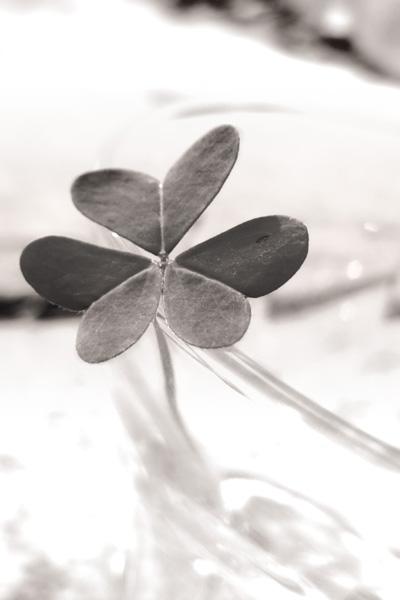 Flower-clover-005