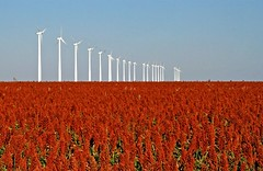 Milo and Wind Farm (Marvin Bredel) Tags: field energy wind farm milo alternativeenergy kansas montezuma agriculture marvin windfarm windpower windturbines marvin908 grainsorghum bredel marvinbredel
