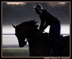 Mist and Mane (Rock and Racehorses) Tags: horse mist ny silhouette dawn twilight saratoga rider thoroughbred mane gallop