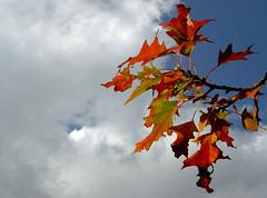 September Again (veloopity) Tags: autumn red sky cloud green fall leaf interestingness september davidsylvian 434 i500