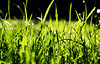 The Grass is Sometimes Greener on This Side (lowbattery) Tags: green grass garden drops bokeh blades