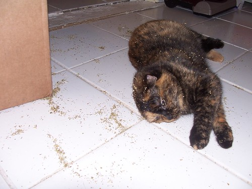 mokey drunk on catnip