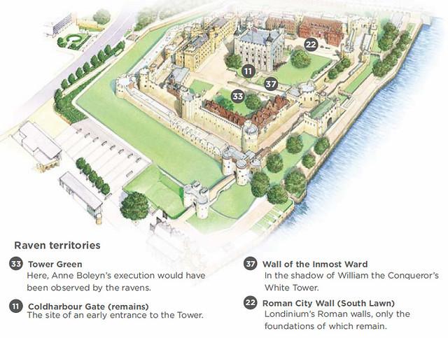 Torre de Londres - Corvos