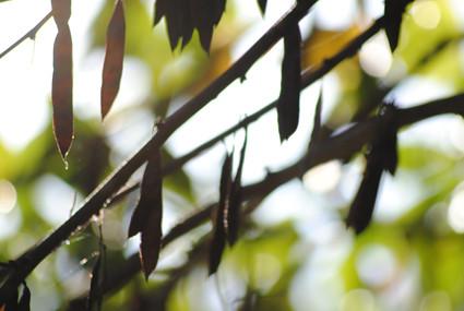 bokeh-tree-2