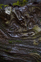 Fallen Tree During a Light Rain (wendy crockett) Tags: wet forest bigsur redwood pfeifferstatepark