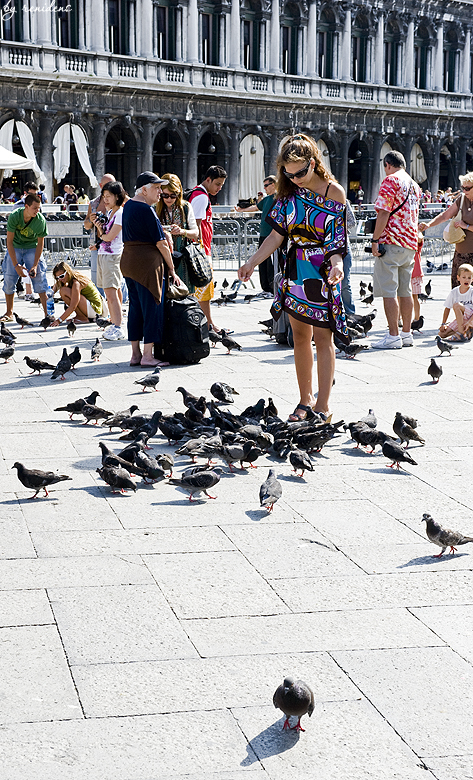 woman feeding pigeons on the Piazza San Marco