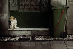 Granada (Jose Luis Fernandez Tolhurst) Tags: dog photography photo spain europe jose granada fernandez