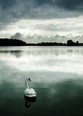 Le lac du Cygne (Jerome Mercier) Tags: leica france nature landscape photo foto photographie photos lac rhne 101 fotos fv10 paysage miribel cygne finest natures fairytales photographe naturesfinest fr69 abigfave leicadigilux3 digilux3 diamondclassphotographer flickrdiamond jm69007 jeromemercier 100commentgroup jeromemercierphoto jmbook bookjm